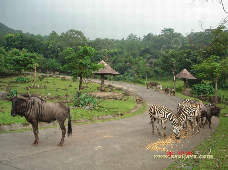 Taman Safari II: Full Of Interesting Site For Having Family Recreation ...