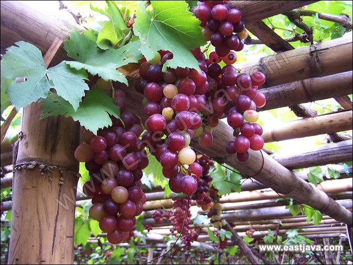 Grape Hotel Wroclaw Poland