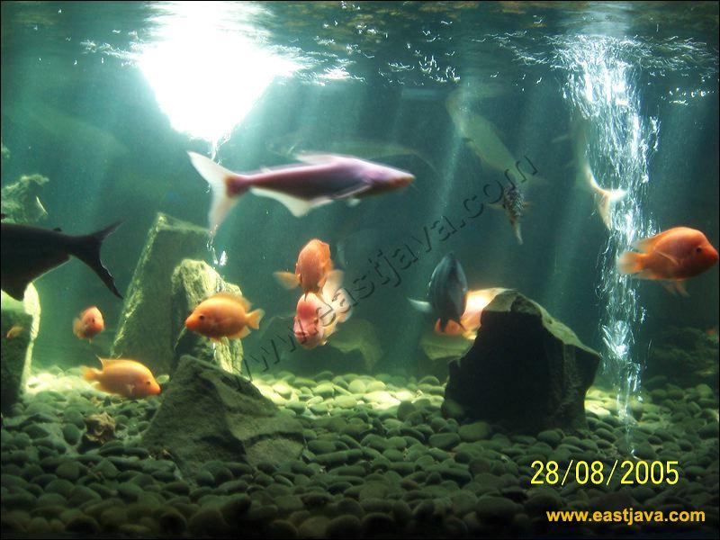 Wisata aquarium di surabaya