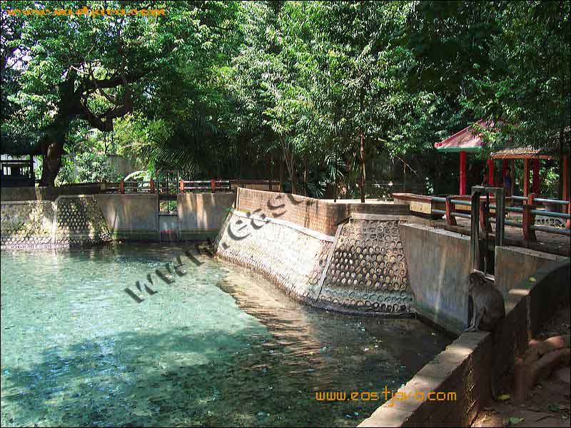 Bektiharjo natural pool tuban east java indonesia for Show java pool size